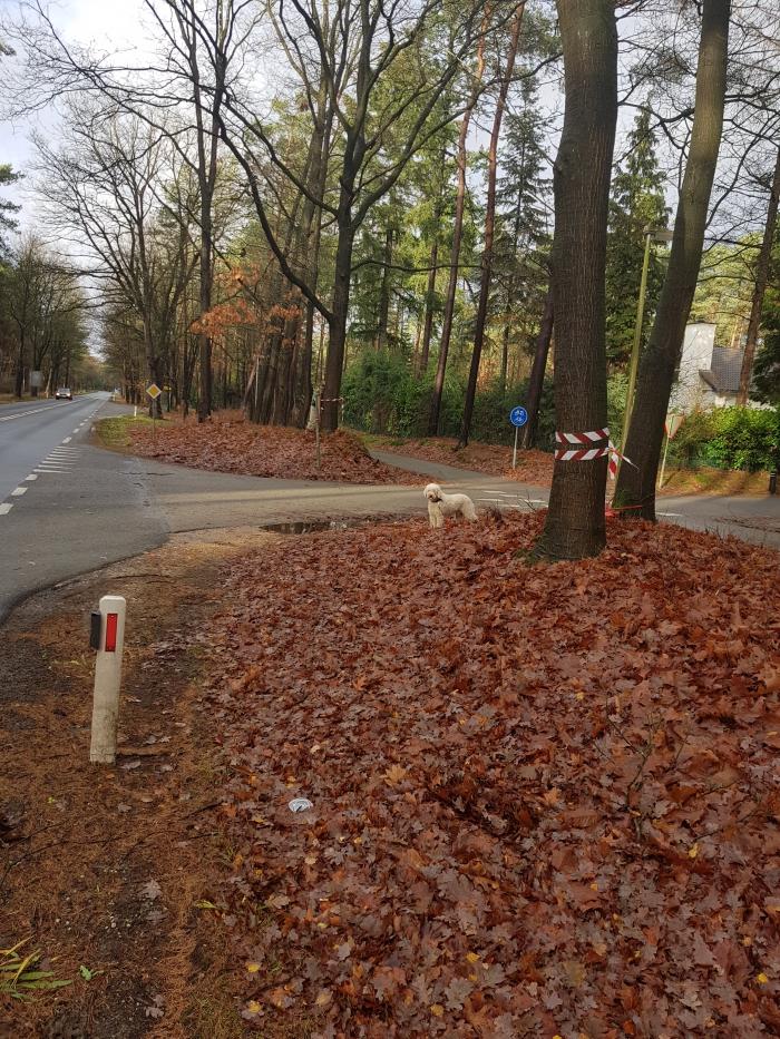 Een lintje om de bomen naar het park